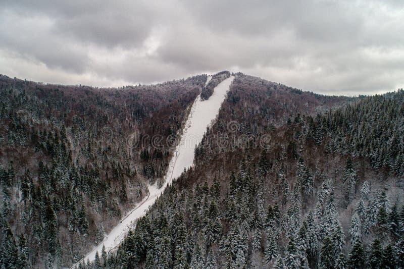 Могущественные горы и их леса в зиме стоковое фото