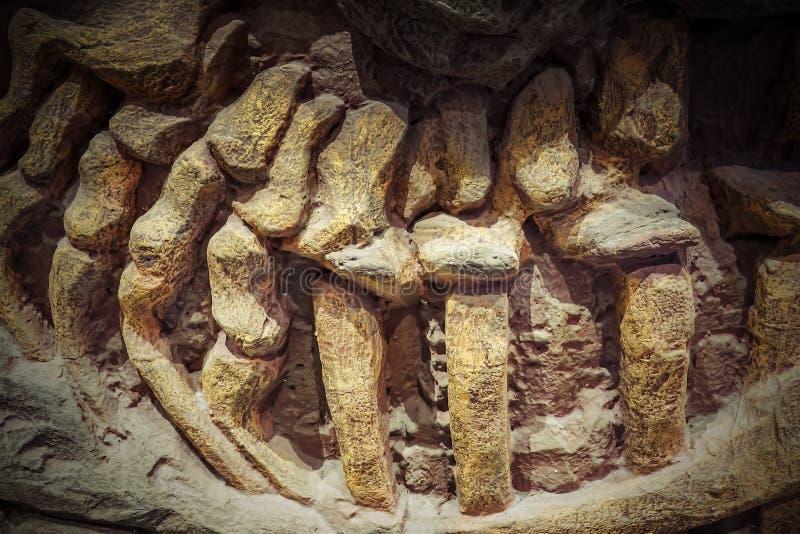 Модельное ископаемый динозавра, динозавры разнообразная группа в сос стоковая фотография rf