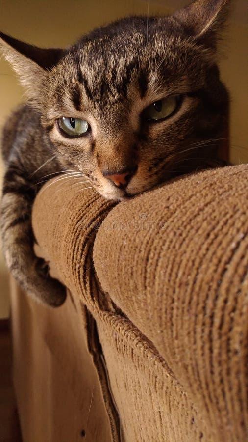 Модельный котенок стоковое фото