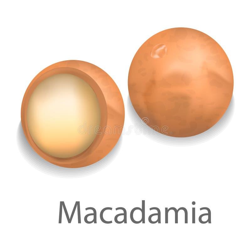 Модель-макет макадамии, реалистический стиль иллюстрация вектора