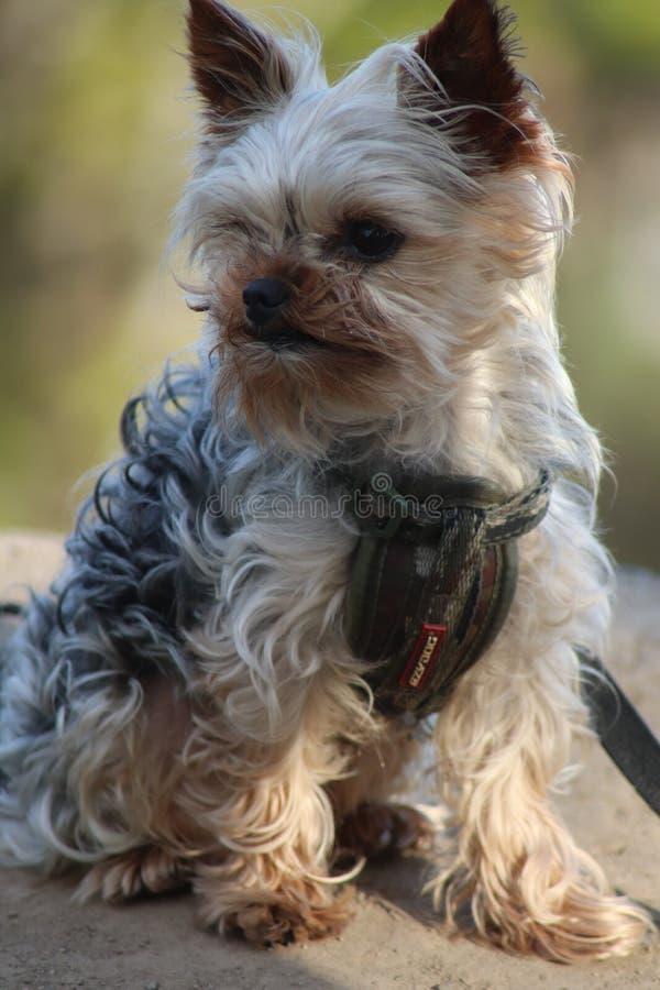 Модель собаки стоковые фото