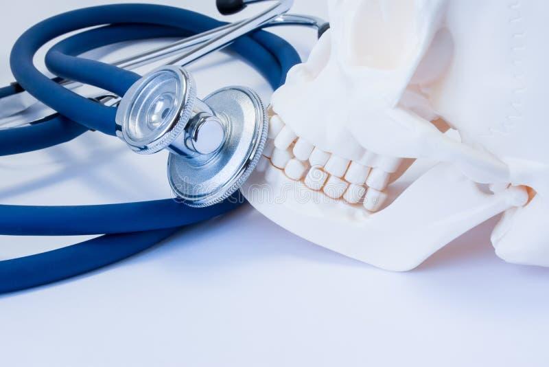 Модель человеческого черепа с зубами с стетоскопом или phonendoscope близко Фото символизируя зубоврачебные заболевания здоровья  стоковое изображение