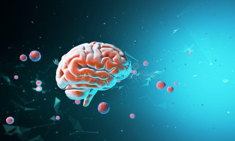 модель 3D человеческого мозга иллюстрация вектора