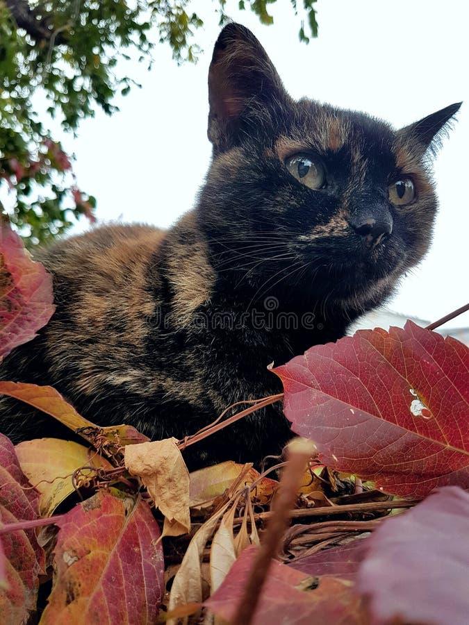 мое кота симпатичное стоковые фото