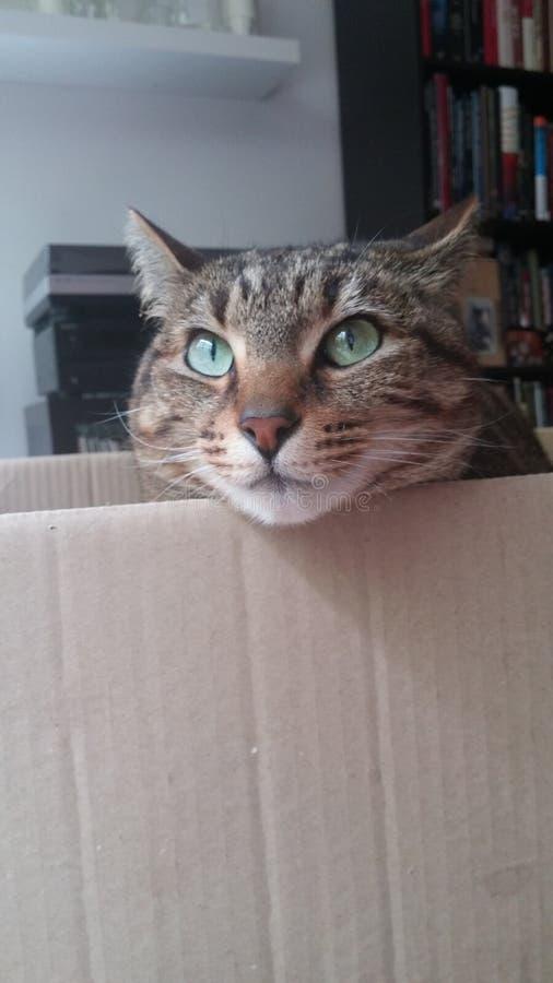Мое Молли кота: ') стоковая фотография rf