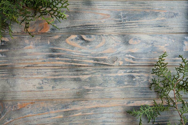 Можжевельник разветвляет тимберс предпосылки оформления деревянный стоковое изображение