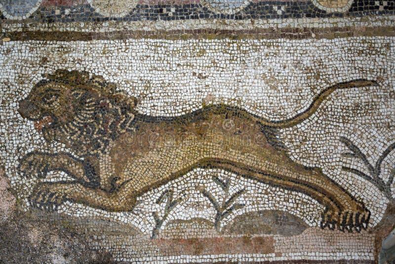 Мозаика льва в парке Paphos археологическом, Кипре стоковые фото