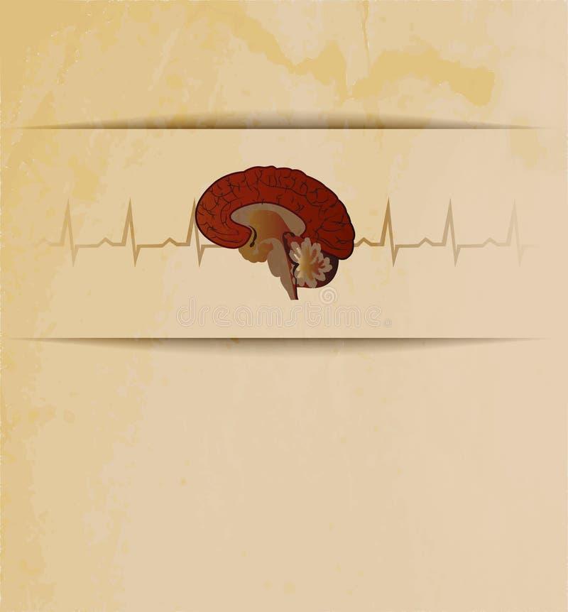 Мозги иллюстрация вектора