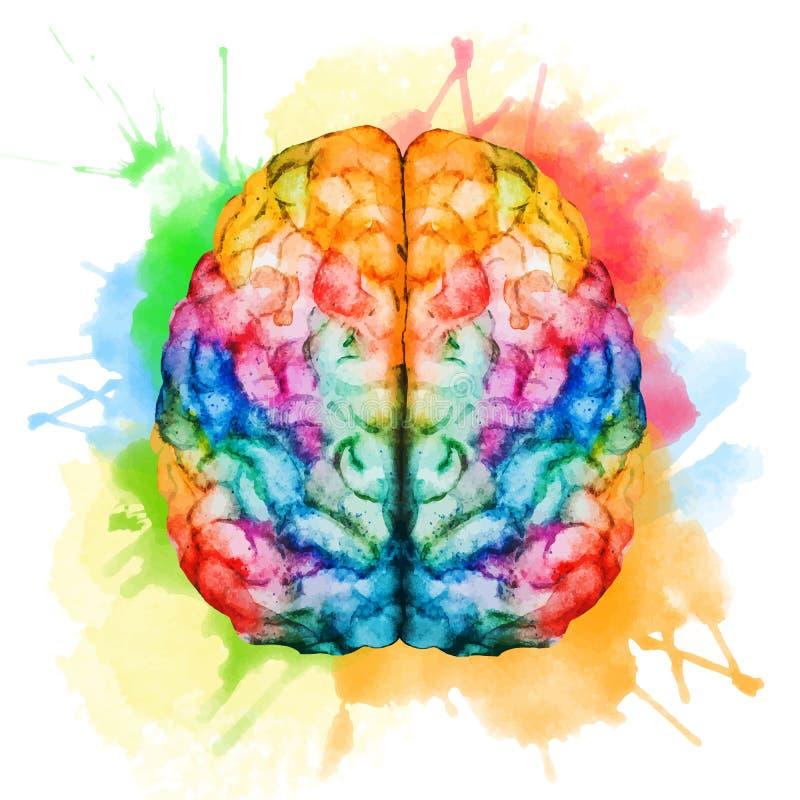 Мозг акварели иллюстрация вектора