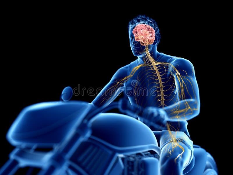 мозг велосипедистов иллюстрация вектора