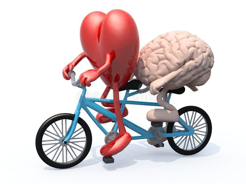 Мозг и сердце ехать тандемный велосипед иллюстрация штока