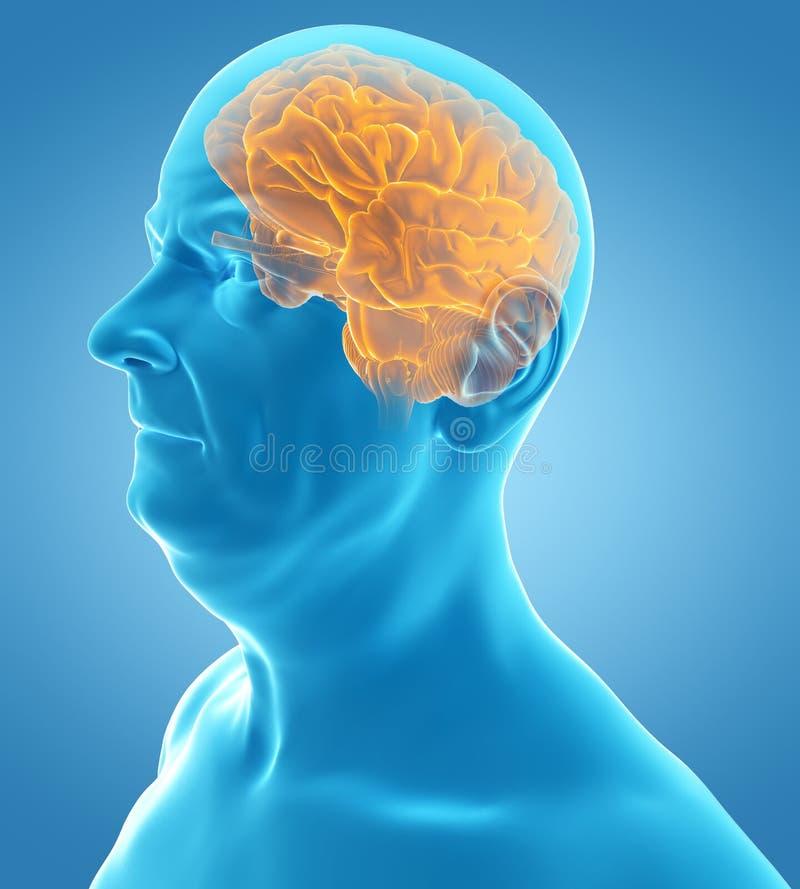 Мозг старых manбесплатная иллюстрация