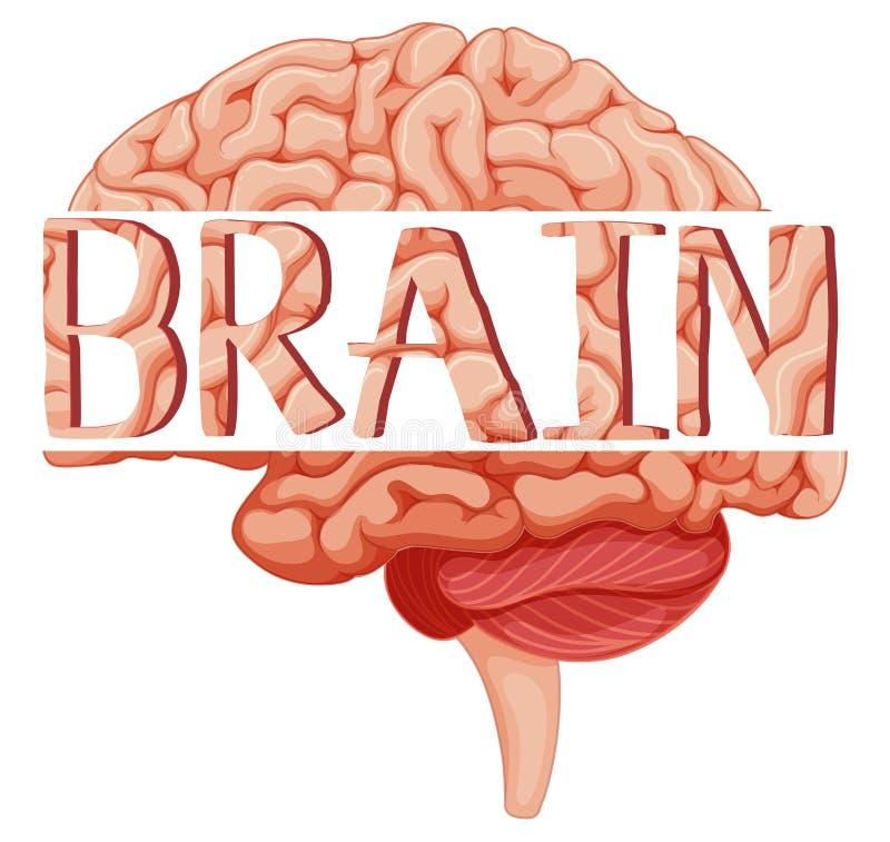 Мозг слова на человеческом мозге иллюстрация вектора