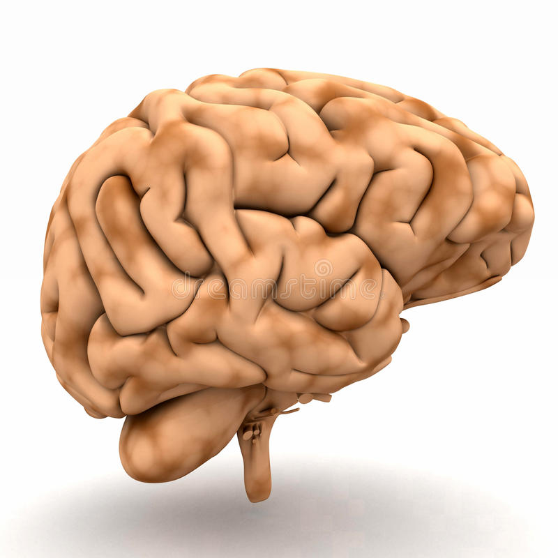 мозг 3D бесплатная иллюстрация