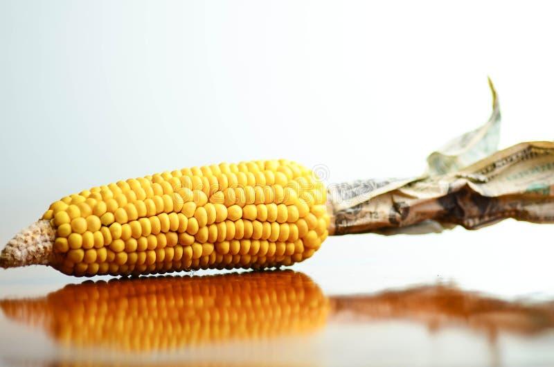 Мозоль и деньги стоковая фотография rf