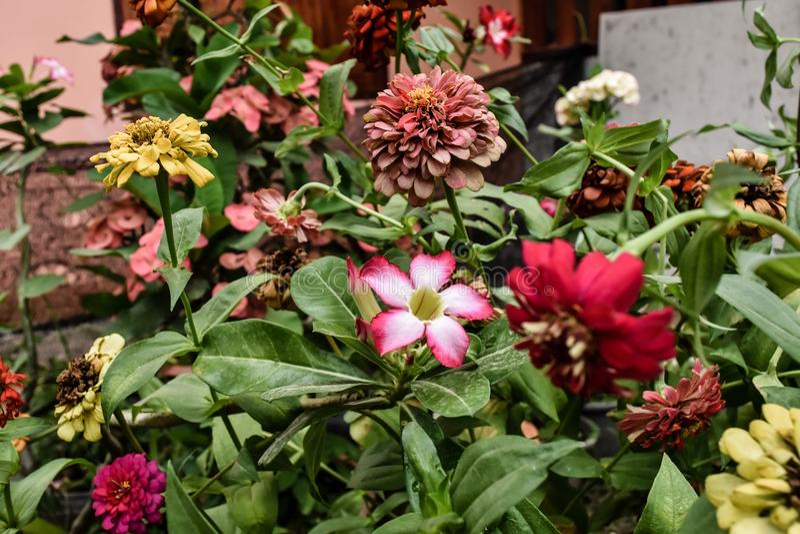 Мои цветки стоковое изображение rf