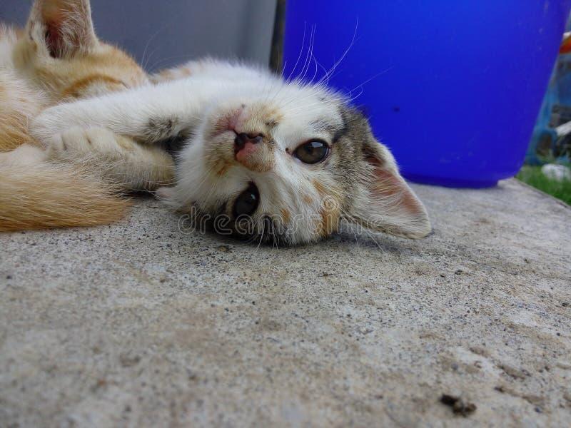 Мой маленький кот пар стоковое изображение rf