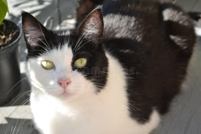 Мой довольно кот наблюданный зеленым цветом стоковое изображение