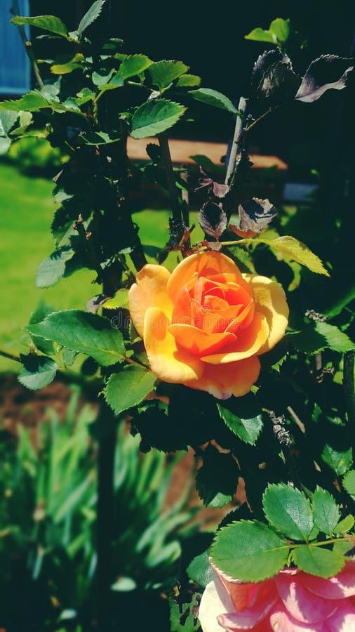 Мой сад стоковое изображение rf