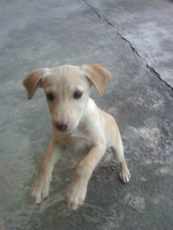 мой щенок стоковое фото