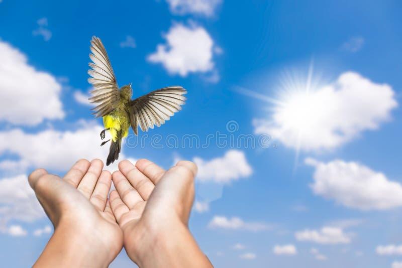 Молить женщины и свободная птица наслаждаясь природой на голубом небе и белом cloudsbackground стоковые фотографии rf