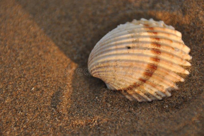 ракушки средиземного моря названия и фото борисовна