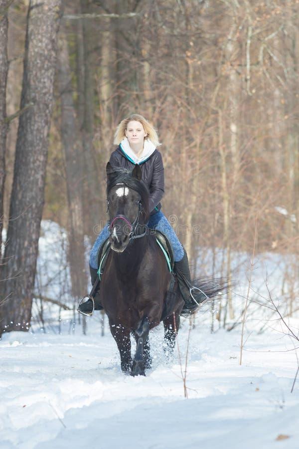 Молодая белокурая женщина ехать черная лошадь в лесе стоковое фото