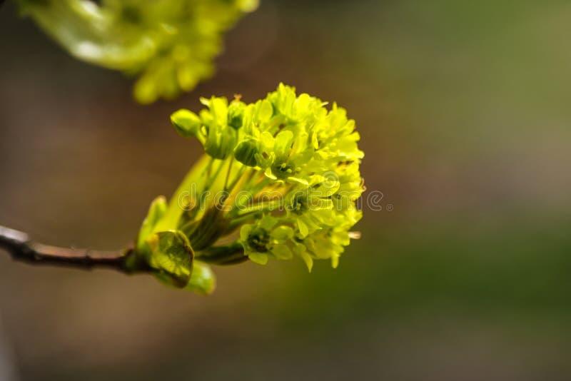 Молодая ветвь завода весной или лета в солнце стоковое изображение