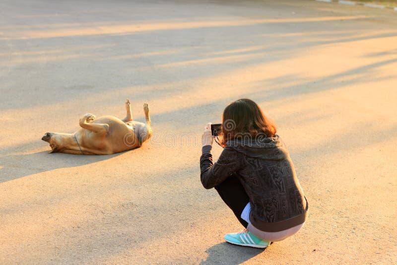 Молодая женщина Азии фотографирует собака стоковые фотографии rf