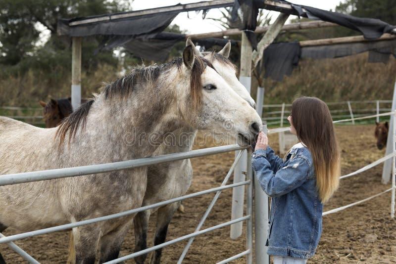 Молодая женщина давая привязанность к некоторым лошадям стоковые фото