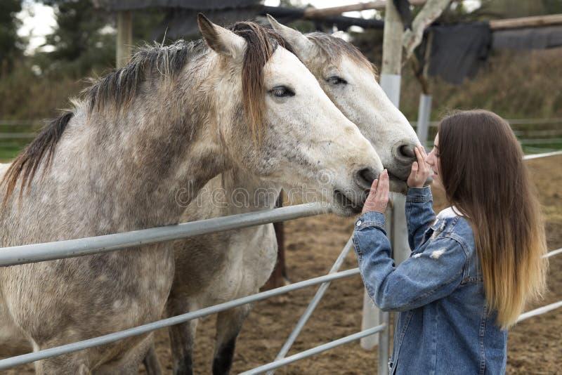 Молодая женщина давая привязанность к некоторым лошадям стоковые фотографии rf