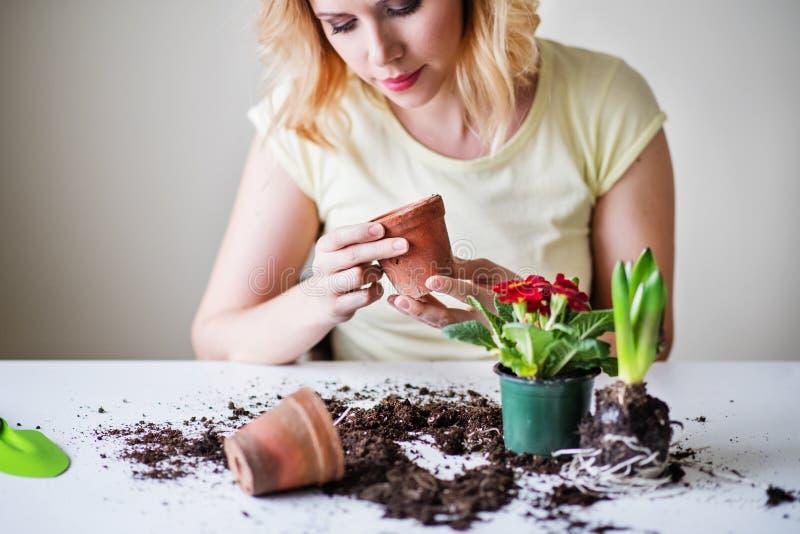 Молодая женщина засаживая саженцы цветка дома стоковые изображения