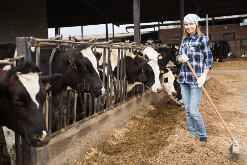 Молодая женщина позаботить о коровы в амбаре коров стоковая фотография