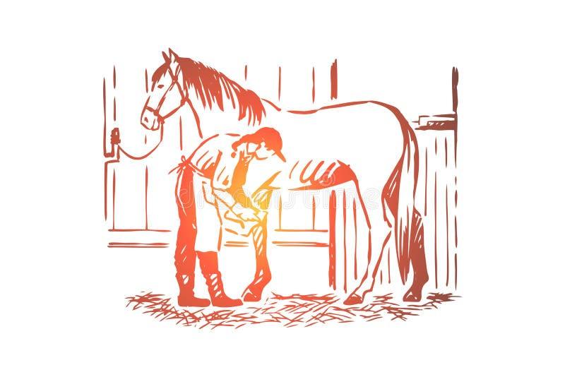 Молодая женщина проверяя подкову жеребца, equine заботу, женский фермера в рисберме, чистоплеменной конематке в конюшне иллюстрация штока