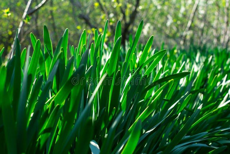 Молодая зеленая трава День Солнца Будить природы стоковое изображение