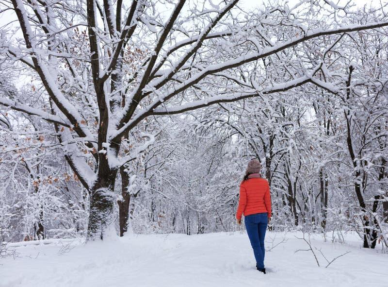 Молодая красивая девушка идет в покрытый снег лес сказки около branchy постоянного старого дуба стоковое изображение