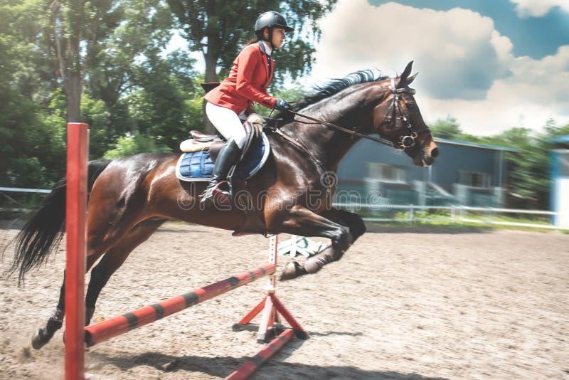 Молодая милая девушка жокея подготавливая лошадь для езды лошади любов девушка ехать лошадь стоковая фотография rf