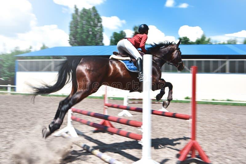 Молодая милая девушка жокея подготавливая лошадь для езды лошади любов девушка ехать лошадь стоковое фото rf