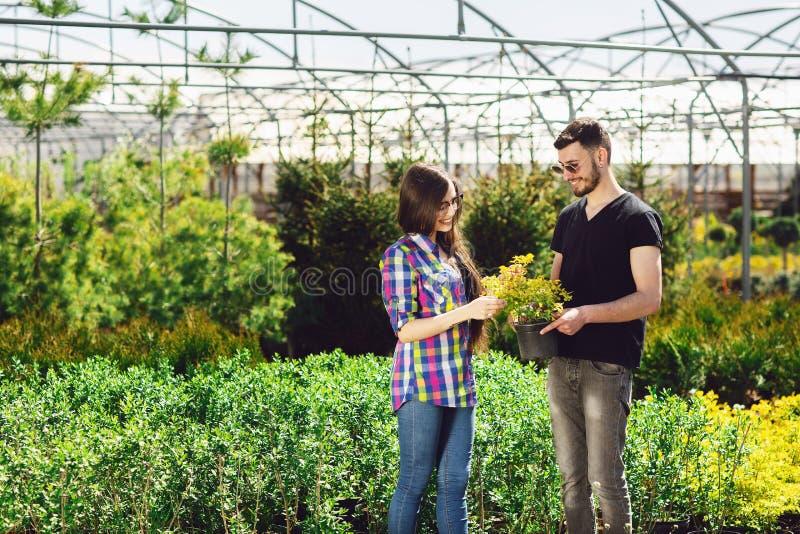 Молодая пара, мальчик в черной футболке и девушка в стеклах, держат бак с зеленым растением Ходить по магазинам в парнике стоковые изображения rf