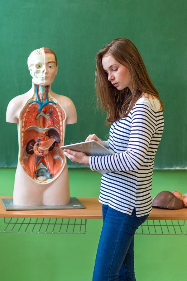 Молодая студентка в уроке биологии, держа цифровую таблетку и уча анатомию человеческого тела стоковая фотография