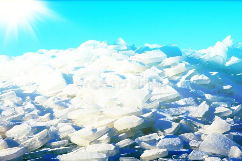 Молодое Toros Блеск льда в солнце любит драгоценности стоковое изображение rf