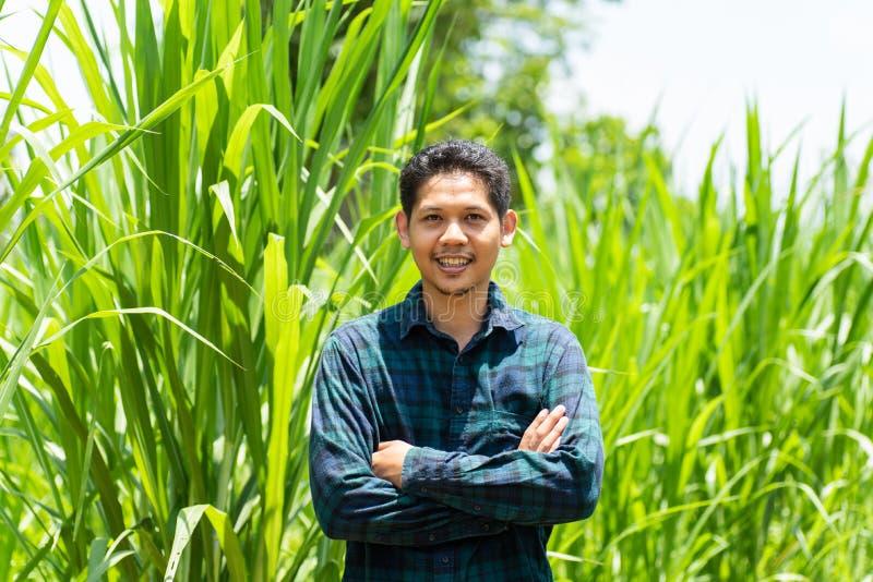 Молодой азиатский фермер стоя в поле травы Napier стоковое изображение rf