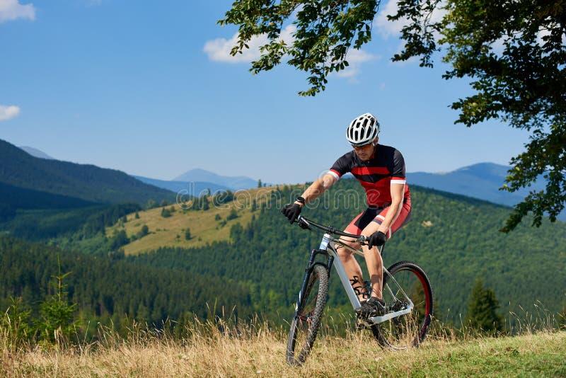 Молодой атлетический турист в sportswear задействуя велосипед в высокой траве под большой зеленой ветвью дерева стоковая фотография