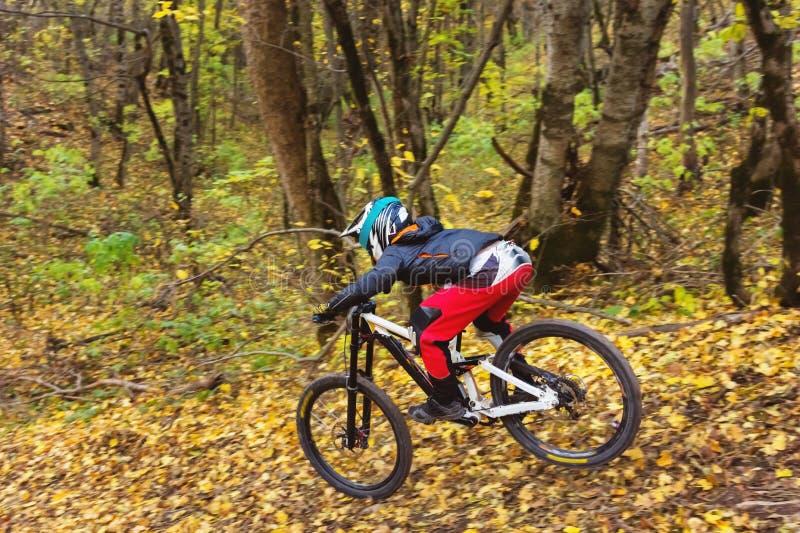 Молодой всадник управляя горным велосипедом едет на скорости покатой в лесе осени стоковые фото