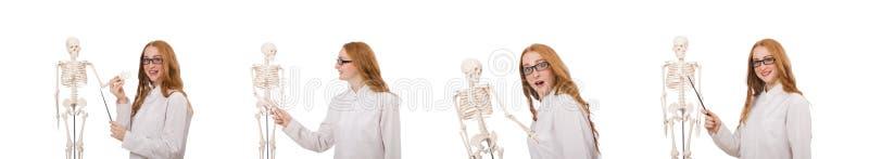 Молодой женский доктор со скелетом изолированным на белизне стоковое изображение rf