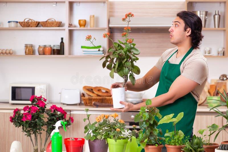 Молодой красивый человек культивируя цветки дома стоковая фотография rf