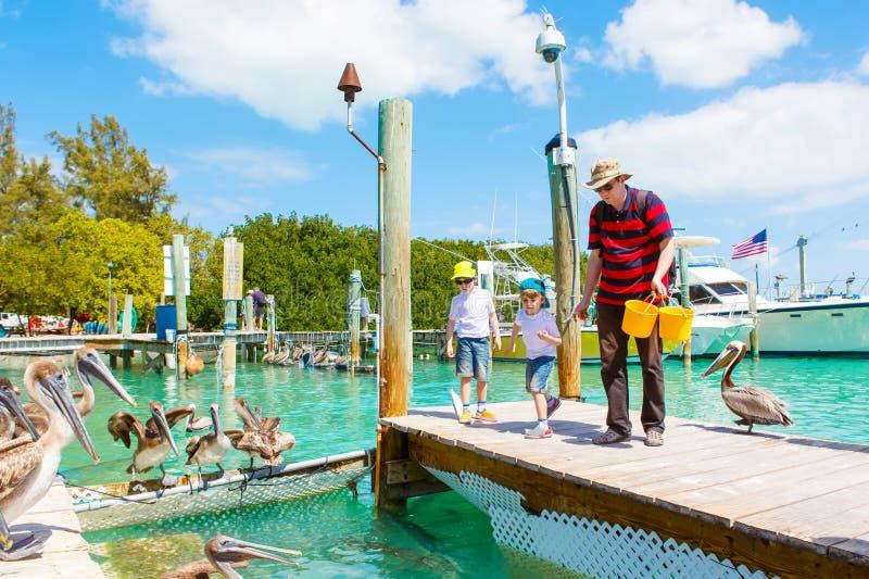 Молодой отец и 2 мальчика маленького ребенка подавая рыбы и большие коричневые пеликаны в порте Islamorada, ключи Флориды человек стоковое фото