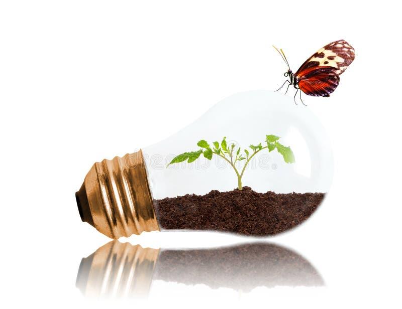 Молодой саженец растя из почвы внутри электрической лампочки с маслом стоковое фото rf
