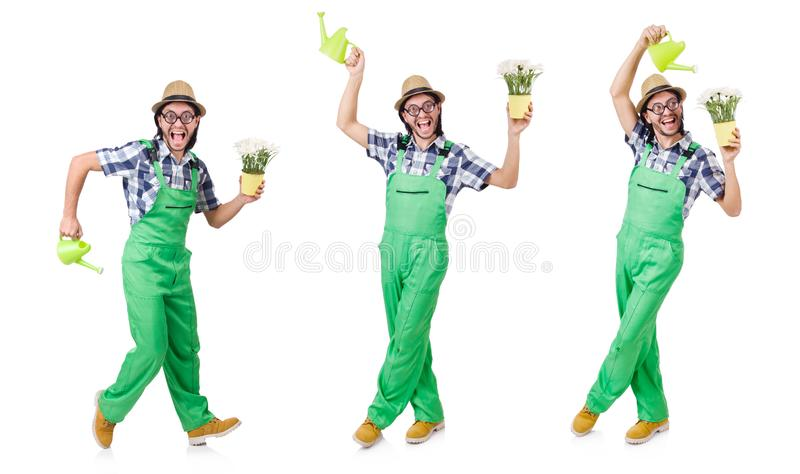 Молодой смешной садовник с тюльпанами и моча консервной банкой изолировал oin белое стоковое изображение rf