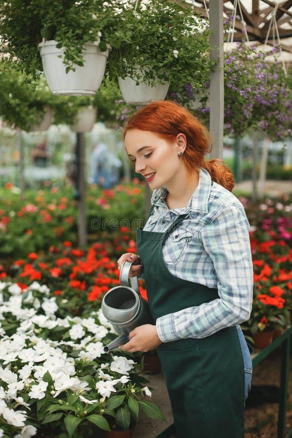Молодой усмехаясь флорист в рисберме стоя с моча чонсервной банкой и мочит цветки пока работающ в парнике стоковые фотографии rf